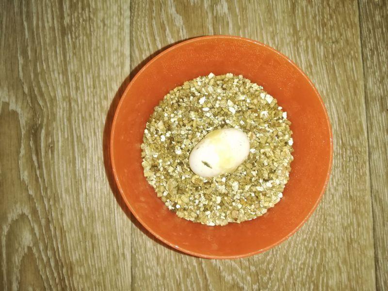 Prasklé vejce